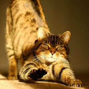 yoga.cat