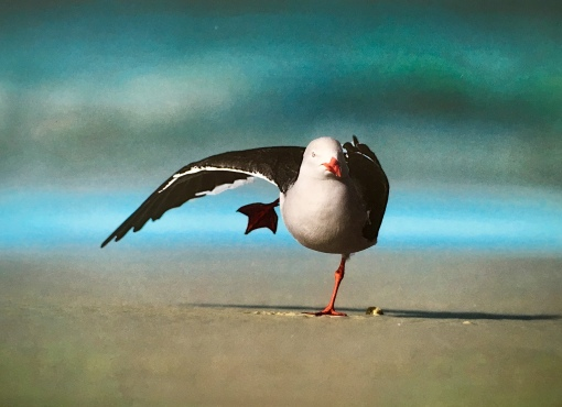 mouette.equilibre